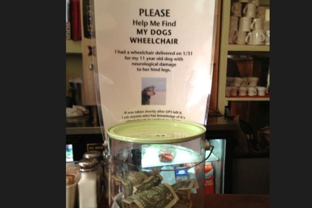 Restaurant Raises Money to Replace Dog's Stolen Wheelchair