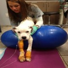 Badly Abused Dog Makes Miraculous Recovery