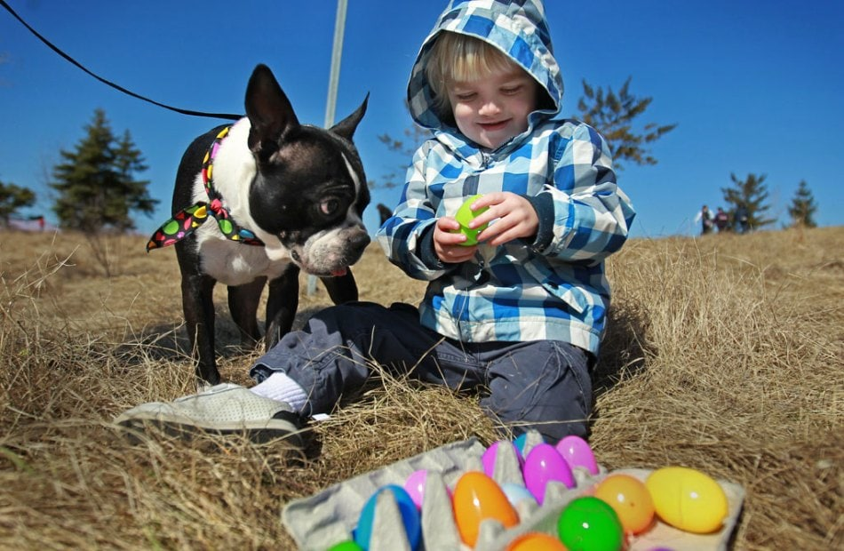 Dog Easter Egg Hunt Helps Autistic Kids