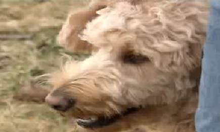 Lucky Dog Survives 300 Foot Plunge into River