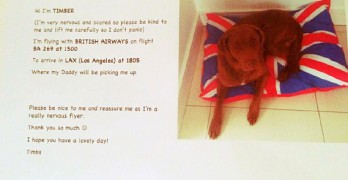 Actor Tom Felton Writes Sweet Note to Make Sure His Dog Travels Safely on British Airways