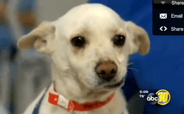 From abused dog to Million dollar dog