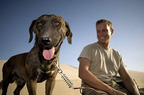 A stray desert dog makes a name for himself, and gets a new life in return
