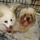 Pennsylvania Rescue Organization Saves 31 Puppy Mill Dogs