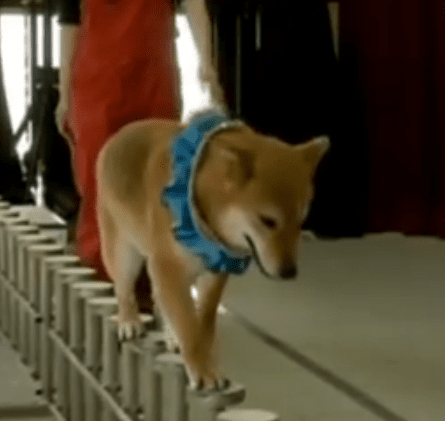 Wow Wow Dog Circus Educating Japanese Children About Shelter Dogs