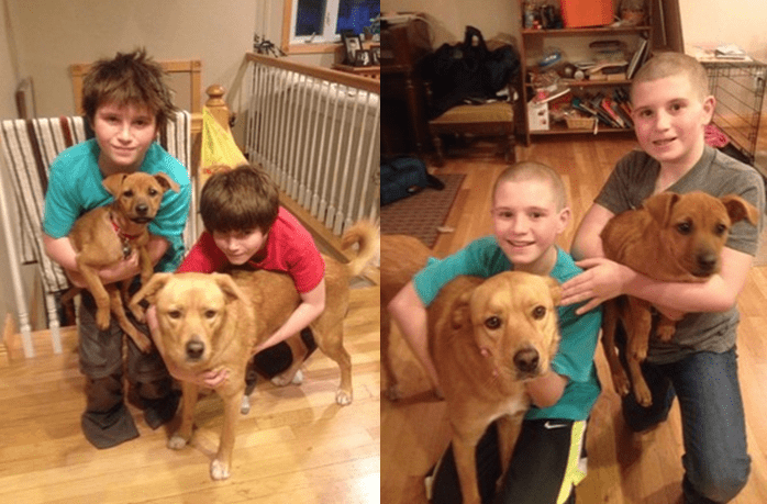 Twin 12-Year-Old Boys Shave Heads To Help Shelter Dog