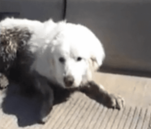 Woman Puts her Life in Danger to Rescue Dog from the Highway