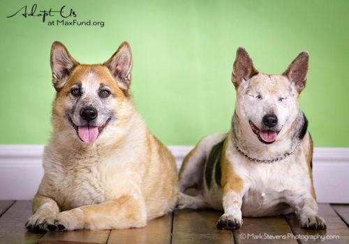 Chico and his best friend and seeing-eye dog Jack need a new home