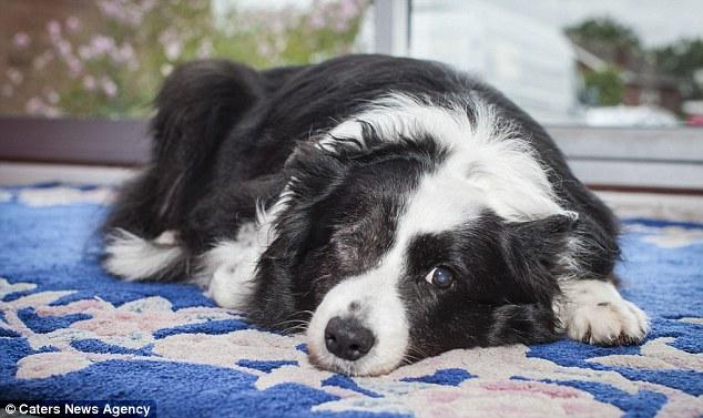 Burglar Who Blinded Dog Will Go To Jail