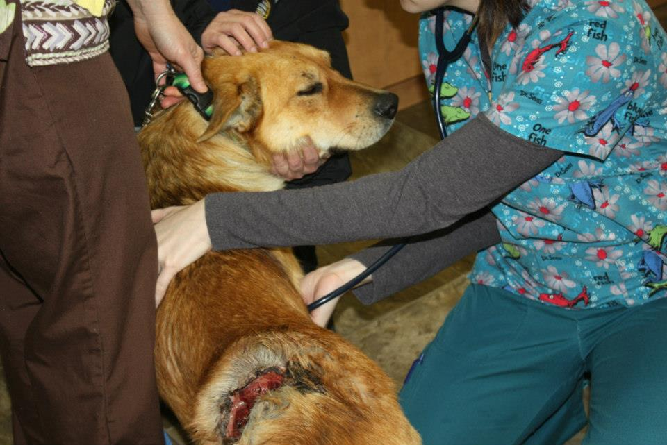 A group effort saves a dog that was shot in northern Manitoba