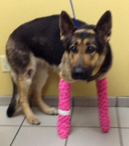 Dog Needs Help After Miraculously Surviving Being Thrown From a Bridge