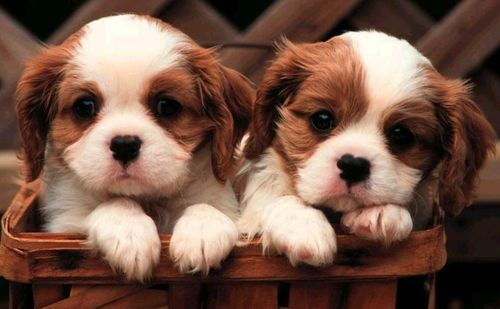 Today is National Puppy Day