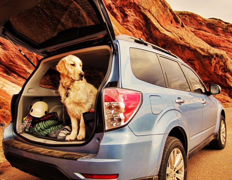 Subaru teaming up with the Center for Pet Safety to make your dog's ride safer
