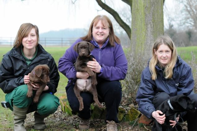 Abandoned Lab Puppies Getting a New Life Training to Become Assistance Dogs