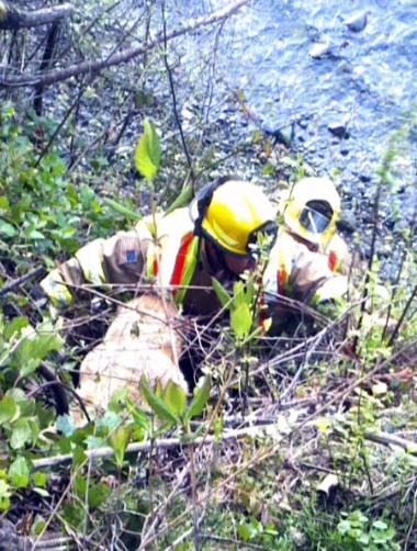 Firefighters Rescue Trapped Dog That Fell Down 45-Foot Cliff