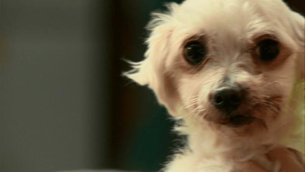 Breeder Voluntarily Surrenders 19 Dogs