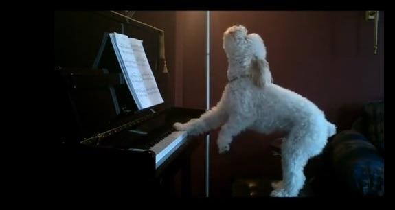 Dog Sings to Moonlight Sonata