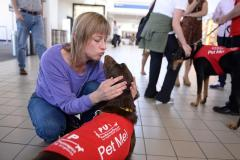 Dogs Helping Calm Passengers at LAX
