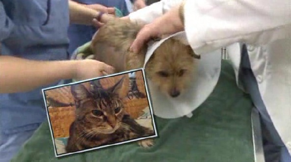 Cat Saves Dog From Dog Attack Life With Dogs