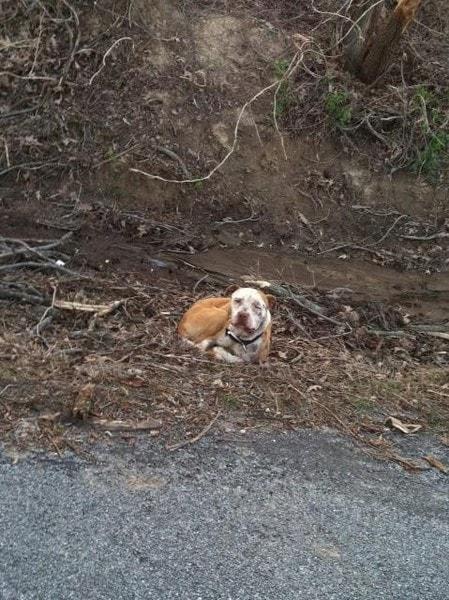Good Samaritans Rescue Abandoned Gun-Shot Dog