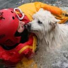 Bystanders Cheer as Blind Dog is Rescued from Lake Ontario