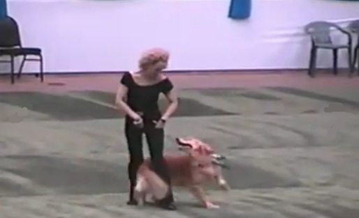 Dog and Owner Dance to Grease
