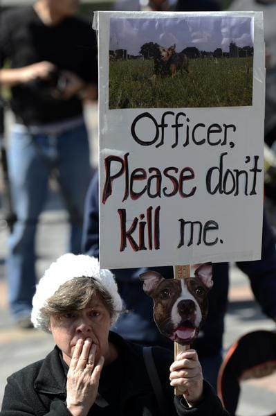 "Colorado Senate Approves ""Don't Shoot My Dog"" Bill"