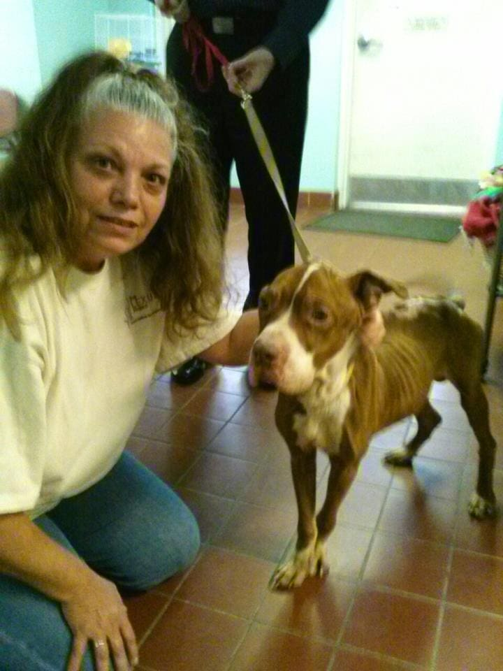 Woman Turns to Facebook to Save Starving Neighbor Dog
