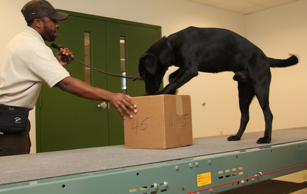 Wildlife Detector Dogs Trained to Find Smuggled Animals