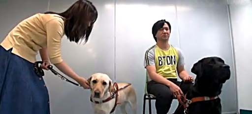 Guide dogs change the lives of two visually impaired Hong Kong residents