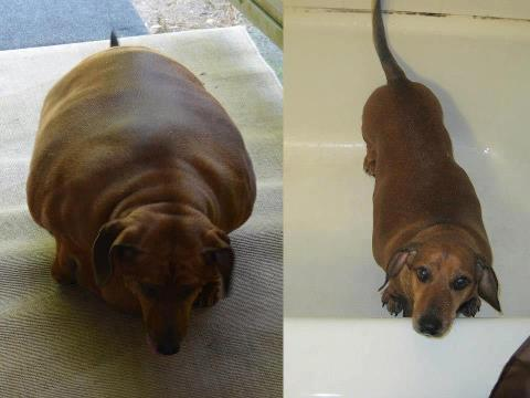 obie before and after image � life with dogs