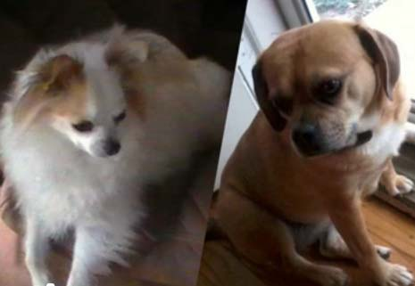 Meat laced with strychnine poisons three Omaha dogs, killing two