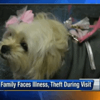 Elderly couple has dog stolen while traveling to funeral