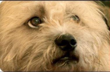 Veteran Finds Companion in Service Dog