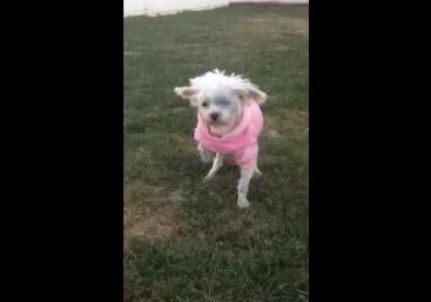 Puppy Mill Dog Walks On Grass For The First Time