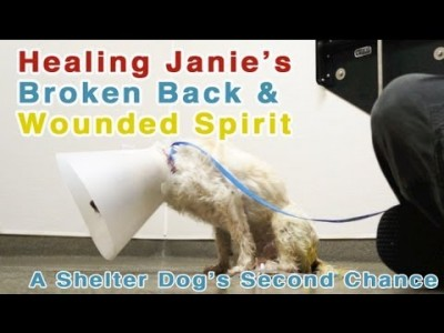 Healing A Shelter Dog's Broken Back And Wounded Spirit