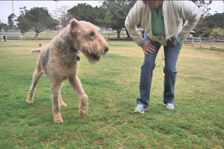 Blind, Deaf Dog Kicked Out Of Dog Park