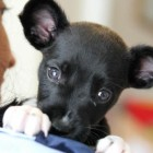 Abandoned Puppy Now Saving Lives