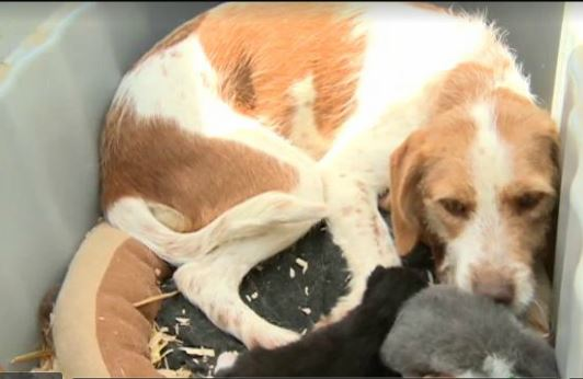Dogs Shares Mothering Duties for Litter of Kittens