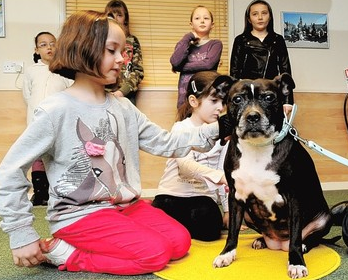 Staffordshire Bull Terrier Helping Children And Changing Her Breed's Image