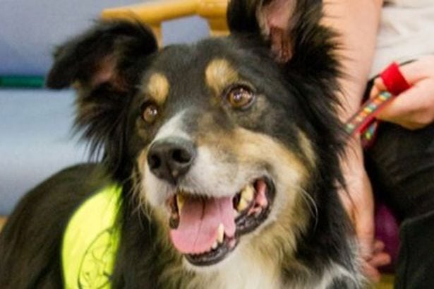 Cancer Therapy Dog Diagnosed With Cancer Himself