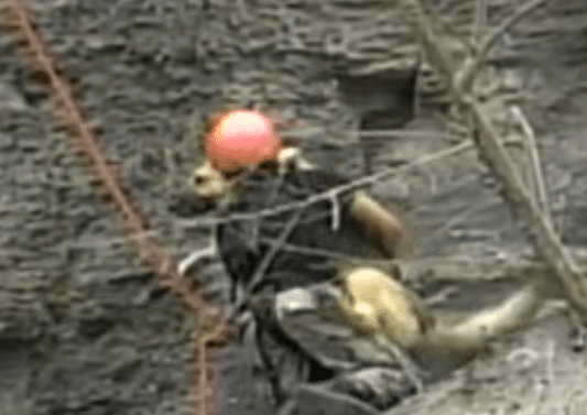 Firefighters Rescue Dog Stranded On 200 Foot Cliff