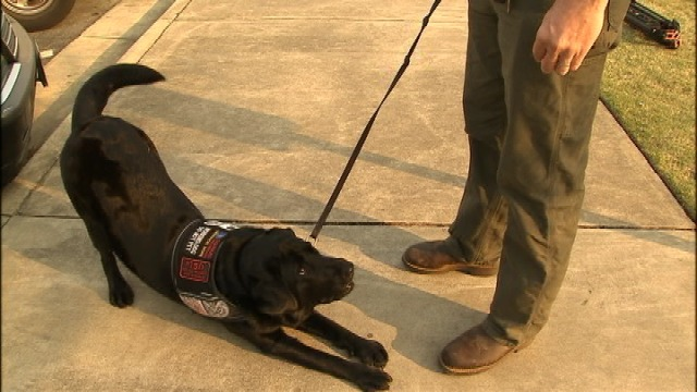 Disabled Vet And His Service Dog Kicked Out Of Gun Store