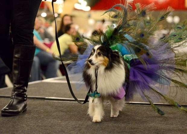 Canine fashion show raises funds for cancer patients