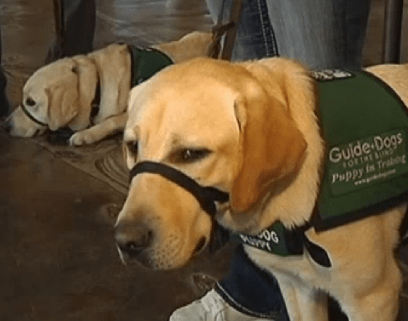 After Reuniting Lost Guide Dog With Owner, Couple Continues Good Deeds