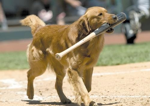 Jake The Diamond Dog Delights Baseball Fans