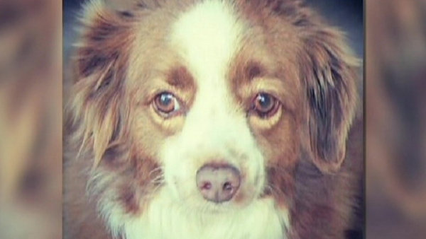 Dog Stolen In Burglary Earlier This Month Is Found