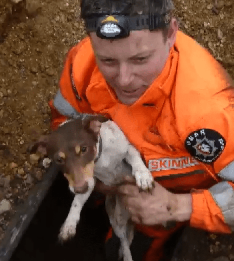 Dog Rescued After Spending Over Four Days Trapped Underground