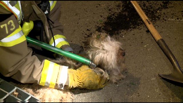Firefighters and Police Rescue Dog From Storm Drain
