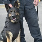Groupon Fundraiser Provides 163 Vests For Police Dogs